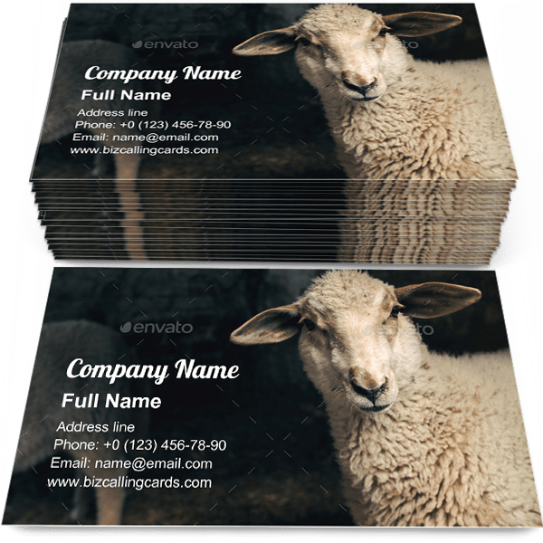Sample of Sheep lamb in farm barn calling card design for advertisements marketing ideas and promote Sheep branding identity