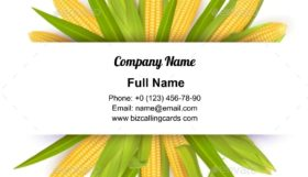 Ripe corn cobs Business Card Template